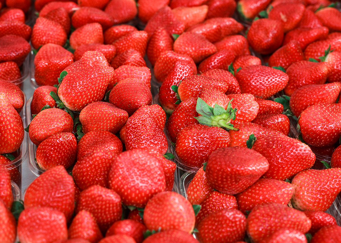 Strawberry Regla: variety description and cultivation