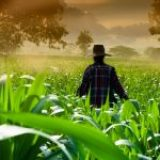 How to Become a Farmer